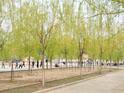 校园风景2:绿色校园